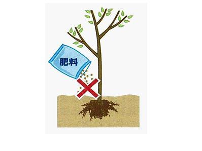 樹木の肥料のやり方。種類と時期について