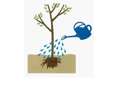 樹木の水やり、タイミング別(植え付け/乾いた時)と量(回数と時間)のポイント