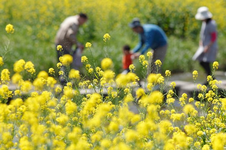住宅の間取りと換気システム設備でできる、これからの花粉症対策