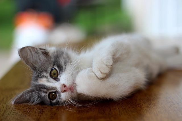 house-cat-281511_640
