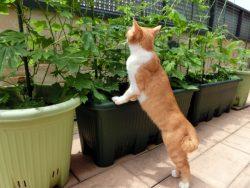 ちょっとだけベランダでガーデニングしたい!家庭菜園初心者向け「ベランダ菜園」