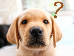 ペットのいる住まいを計画する時のポイント(犬編)