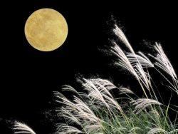 十五夜にお月見を楽しもう!今年は10月4日!