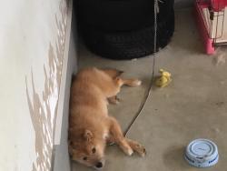 インナーガレージに住む愛犬の噛み癖トラブル