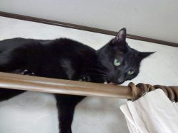 猫と一緒に家で暮らす時に気を付けること3選