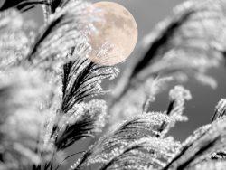 秋の風物詩「中秋の名月」は満月とは限らない?!