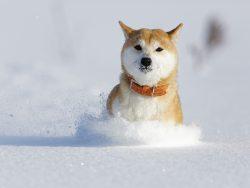 雪への対策はお早めに!北陸地方の初雪はいつ?対策は何する?