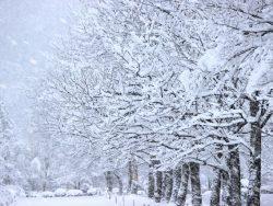 意外?!今年は大雪警報も発令したけど、少なくなっている積雪量