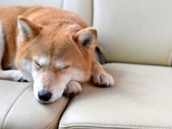 犬の臭い気になりませんか?原因と対策