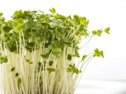 ペットボトルで自作の葉物野菜を水耕栽培してみませんか?