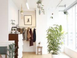 観葉植物の冬の管理と注意点