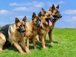 ペット・犬の夏の暑さ対策